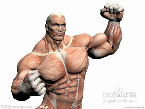 胸肌怎么练最快?练胸肌的方法|完美胸肌速成记