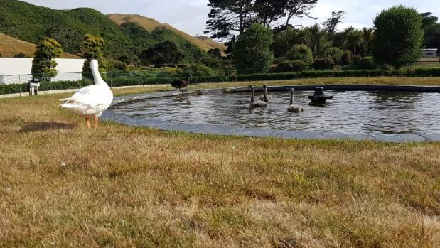 同性恋鹅与天鹅相爱18年 人们合葬两鹅立雕塑纪念